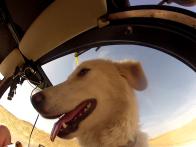 TWIKE Hund Baya